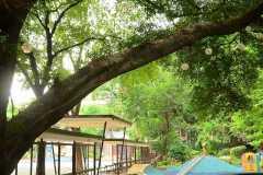 BR-Juniper-Playground3